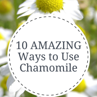 Chamomile is known for it's calming properties but did you know you can also make DIY bug spray with dried chamomile flowers? Find 10 amazing ways to use chamomile in this post | abraskitchen.com