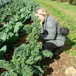 A Visit to Alstede Farm