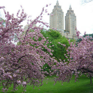 An Edible Adventure Through Central Park