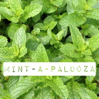 fresh mint recipes